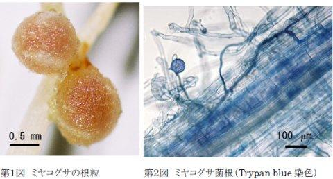 畑信吾: 第49回定例オープンセミナー(2007年2月14日)