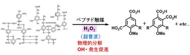 高谷光 2008: 図 2. メタル化ペプチド触媒を用いるリグニンの精密酸化分解