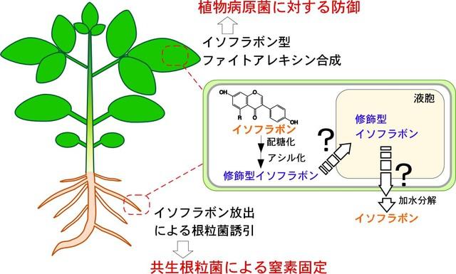 高橋征司: 20123(平成25)年度 生存圏科学萌芽研究