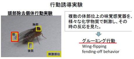 柳川綾: 20123(平成25)年度 生存圏科学萌芽研究