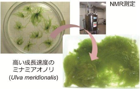 椿俊太郎: 2014(平成26)年度 生存圏科学萌芽研究 図