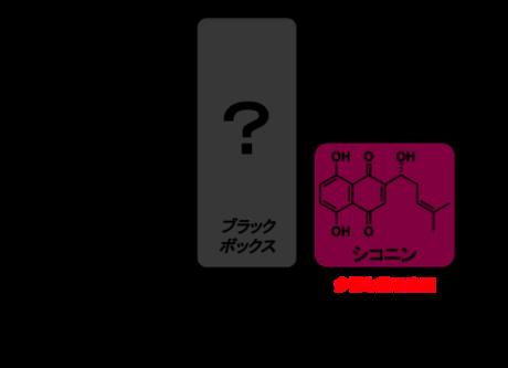 渡辺文太: 2014(平成26)年度 生存圏科学萌芽研究 図