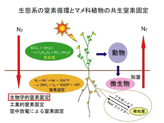 伊藤嘉昭: 2010(平成22)年度 生存圏ミッション研究 (図 1)