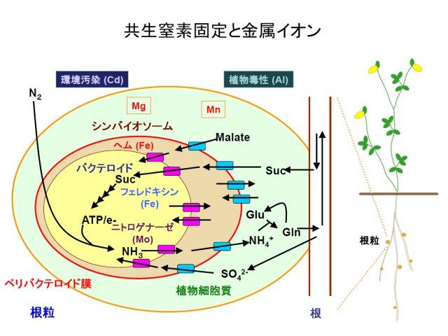 伊藤嘉昭: 2010(平成22)年度 生存圏ミッション研究 (図 2)