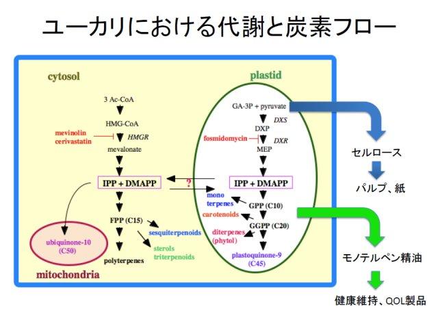 梅澤俊明: 2010(平成22)年度 生存圏ミッション研究 (図 4)