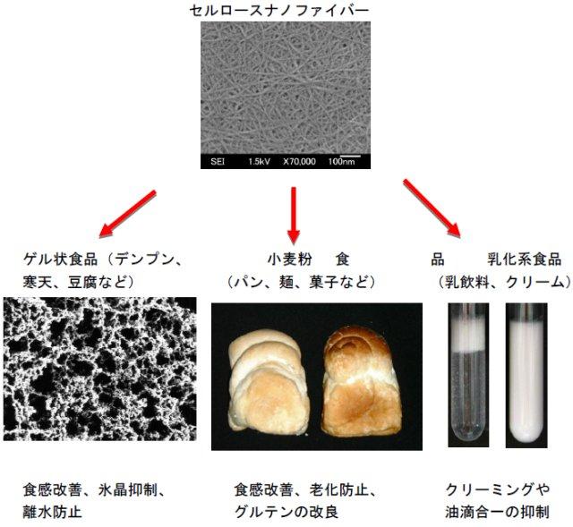 松村康生: 2011(平成23)年度 生存圏ミッション研究