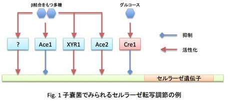 入江俊一: 2012(平成24)年度 生存圏ミッション研究 Fig. 1