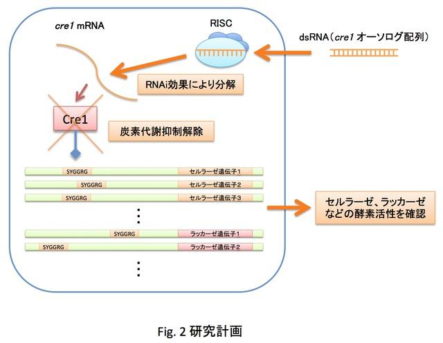 入江俊一: 2012(平成24)年度 生存圏ミッション研究 Fig. 2