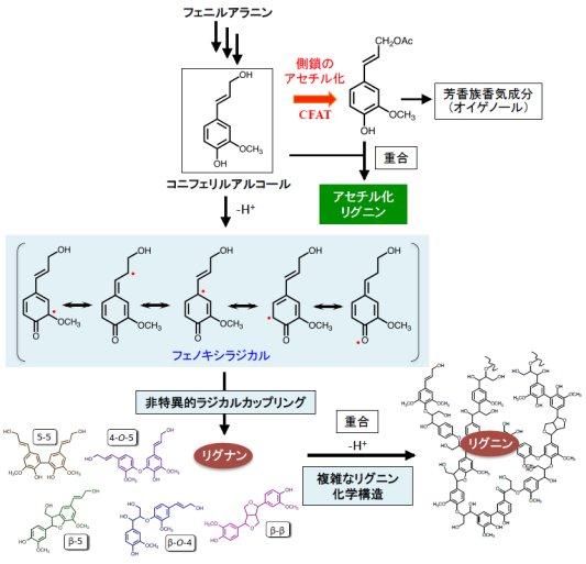 肥塚崇男: 2016(平成28)年度生存圏科学萌芽研究 図