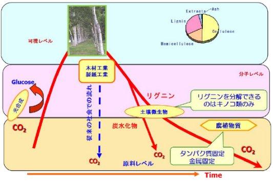 Fig. 1 生態系における植物バイオマスの流れ