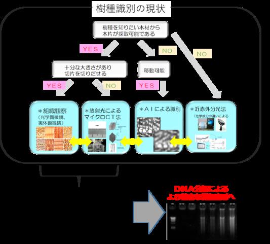 今井友也: 2019(令和元)年度生存圏科学萌芽研究 図